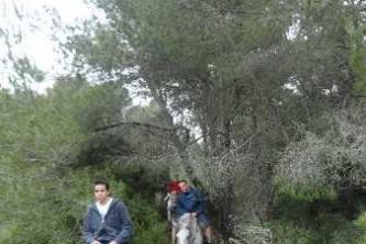 KTV Mallorca 2011 217